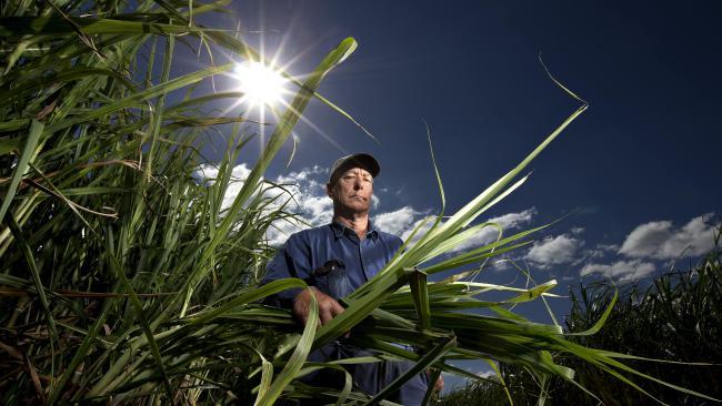 Gold Coast Cane Farmer