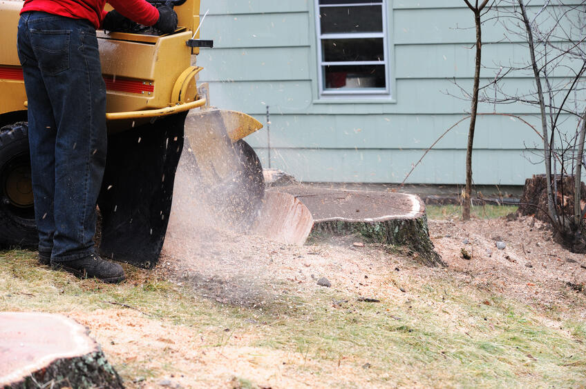 tree-stump-grinding