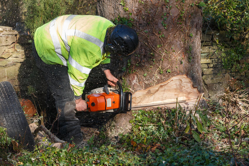 how-to-cut-a-tree-trunk