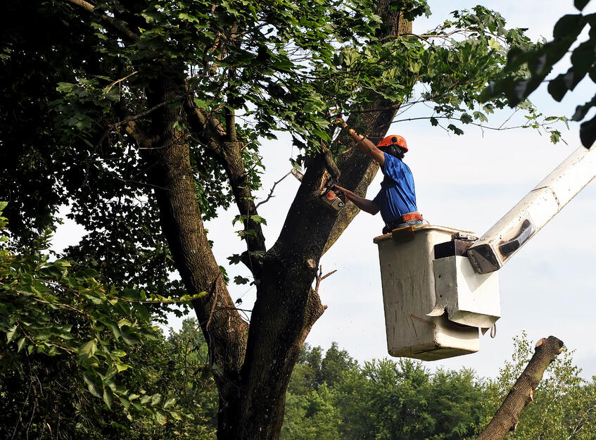 how-to-cut-down-a-tree-remove-branches