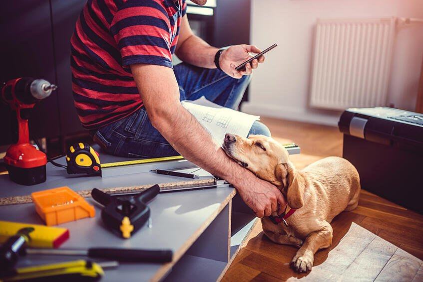 pet safety renovation