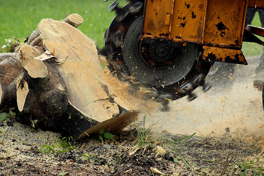 grinding-tree-stump-removal