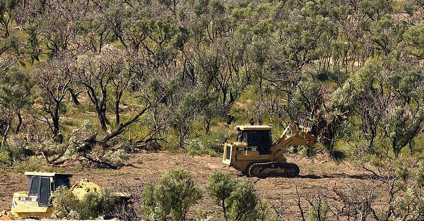 Land Clearing and Tree Removal / Image by WWF Australia